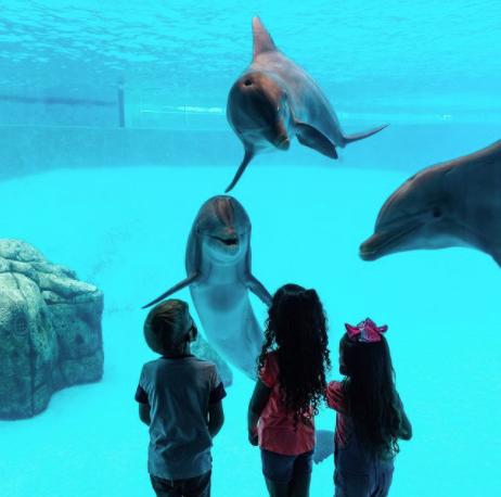 kids at aquarium looking at dolphins